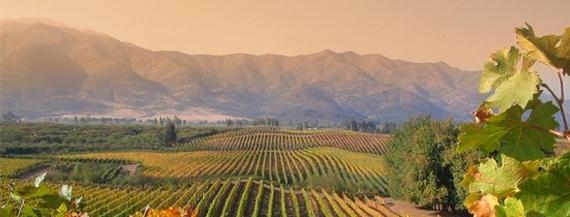 Weingut Altitudes Chile Rapel