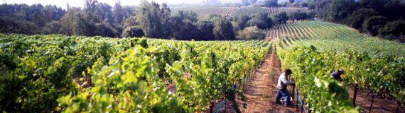 Weingut Sequana