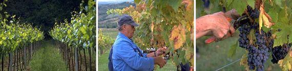 Weingut Terrabianca