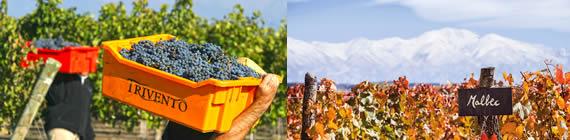 Weingut Trivento